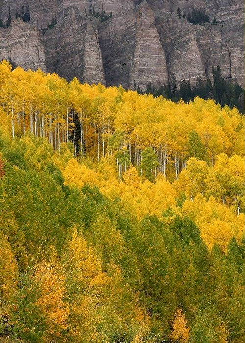 San Greeting Card featuring the photograph Aspen In Autumn At Silver Jack Reservoir by Jetson Nguyen