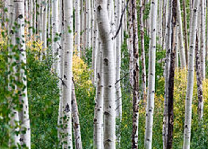 Aspen Greeting Cards