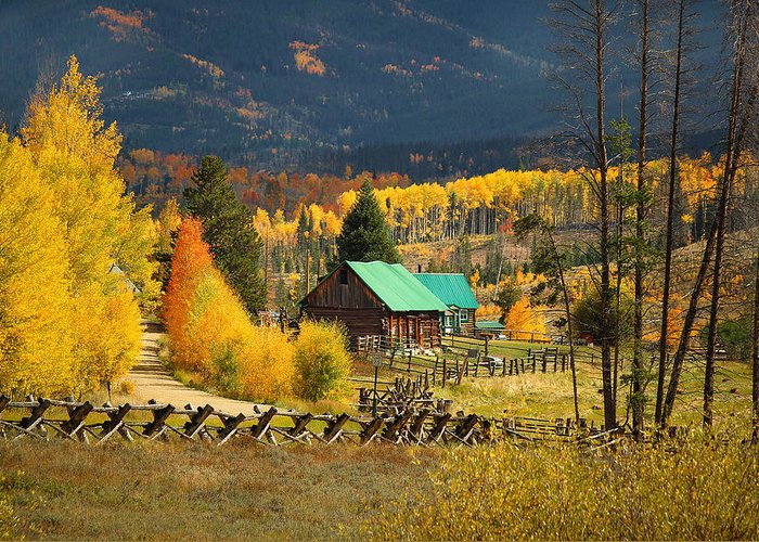 Aspens Greeting Card featuring the photograph Aspens 2 2014 by Jim Painter