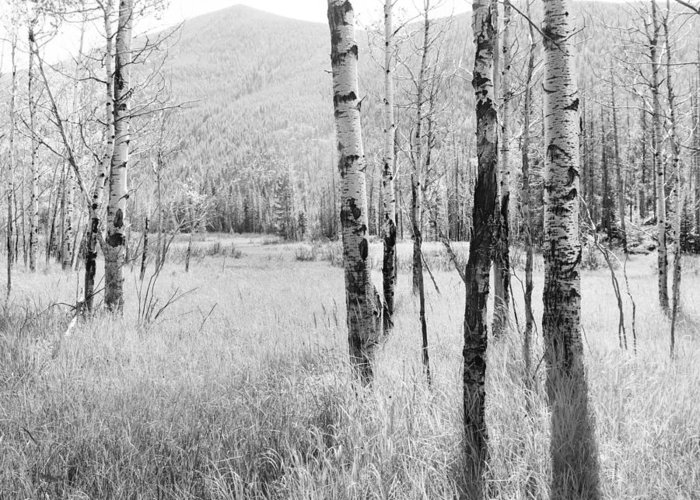 Colorado Greeting Card featuring the photograph Aspens 2 by D Scott Clark