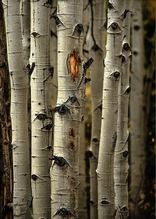 Aspens Greeting Card featuring the photograph Aspens 4 2014 by Jim Painter