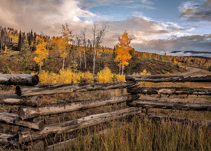 Aspens Greeting Card featuring the photograph Aspens 5 2014 by Jim Painter