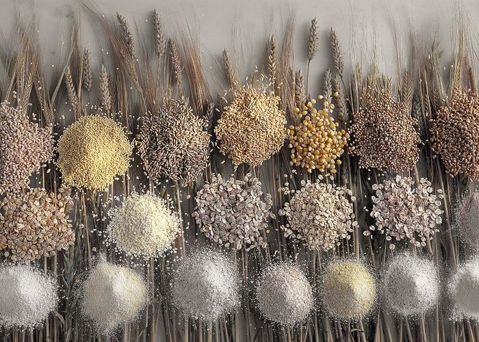 Barley Greeting Card featuring the photograph Assorted Grains And Flour by Science Photo Library