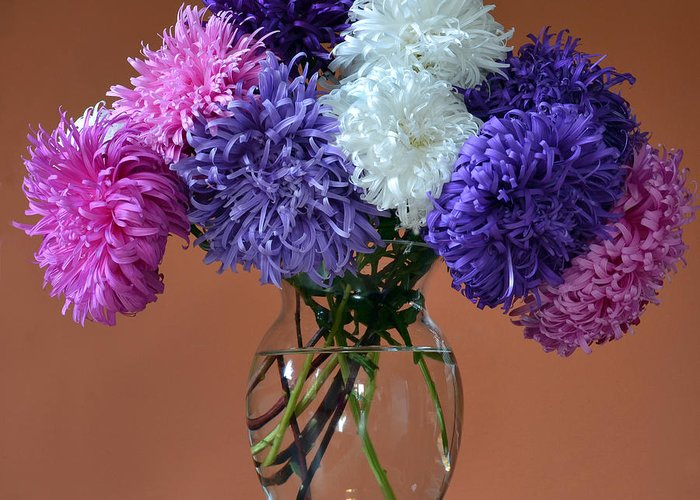Asters Greeting Card featuring the photograph Astonishing Asters. by Terence Davis