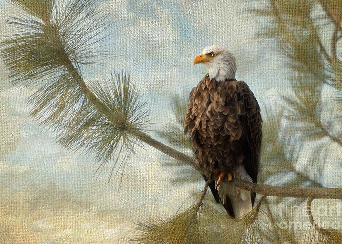 Bald Eagle Greeting Card featuring the photograph At Peace by Beve Brown-Clark Photography