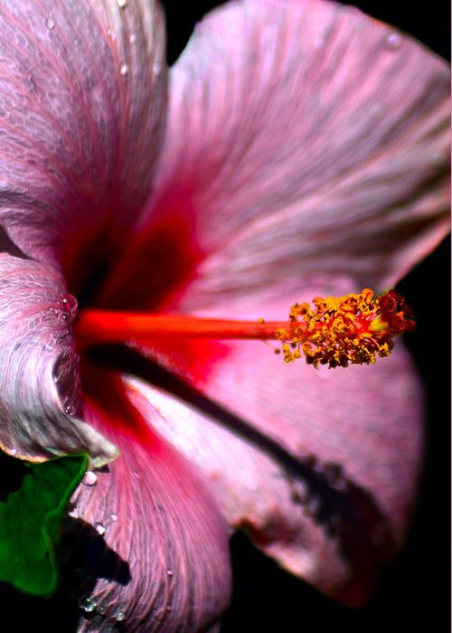 Hibiscus Greeting Card featuring the photograph At The Heart Of It by Camille Lopez