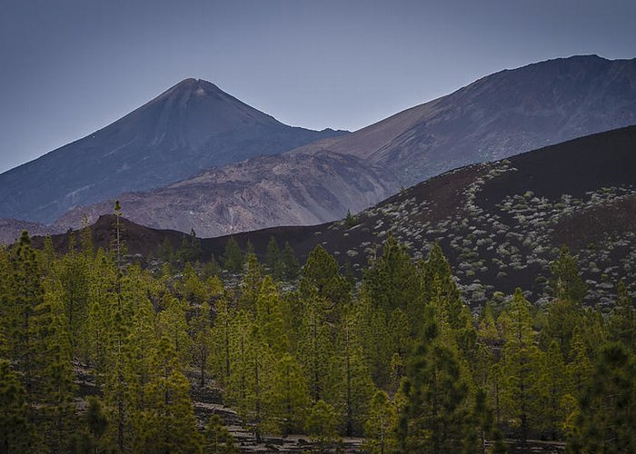 Canary Islands Greeting Card featuring the photograph At The Treeline by Olaf Reinen