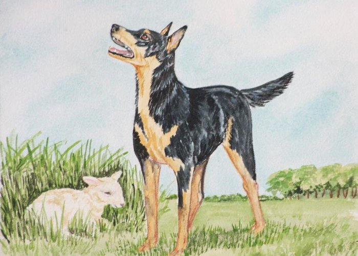 Kelpie Dog Print Greeting Card featuring the painting Australian Kelpie by Heather Anderson