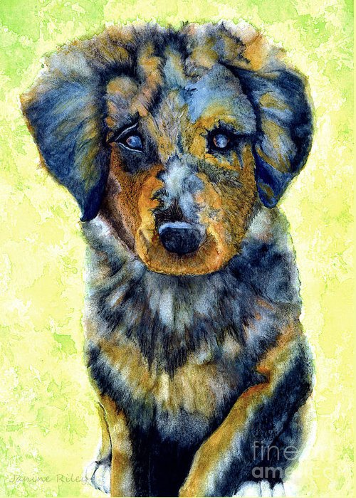 Shepherd Greeting Card featuring the painting Australian Shepherd Puppy by Janine Riley