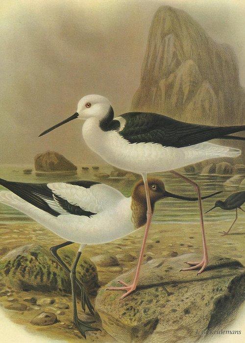 Australian Wildlife Paintings Greeting Cards