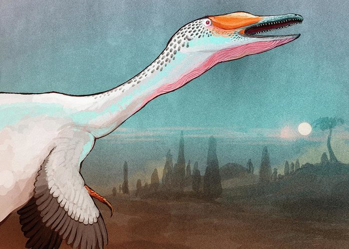 Dromaeosaurid Greeting Cards