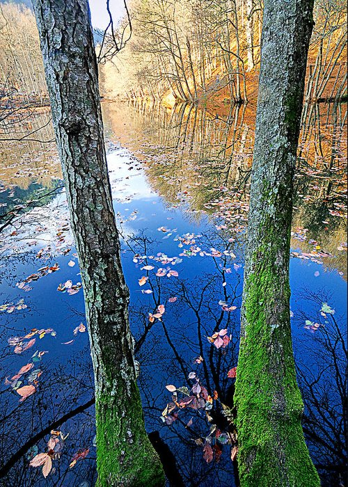 Autumn Greeting Card featuring the photograph Autumn - 7 by Okan YILMAZ