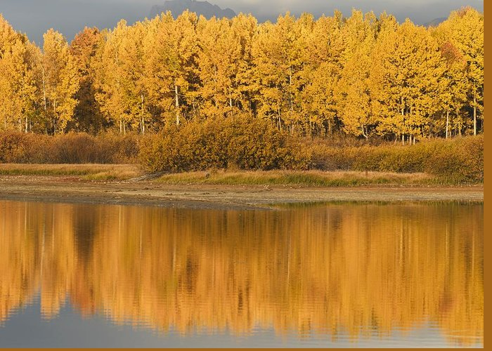 Populus Tremuloides Greeting Card featuring the photograph Autumn Aspens Reflected In Snake River by David Ponton