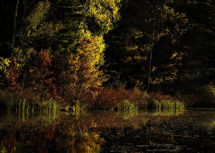 Autumn Greeting Card featuring the photograph Autumn At It's Finest by Thomas Young