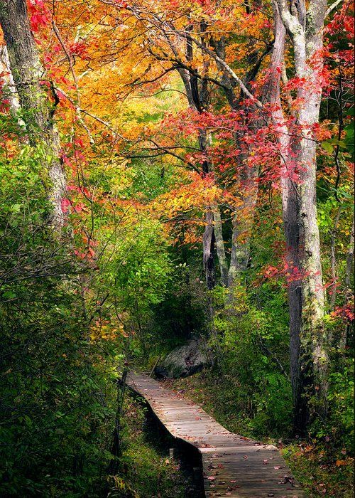 Autumn Greeting Card featuring the photograph Autumn Boardwalk by Bill Wakeley