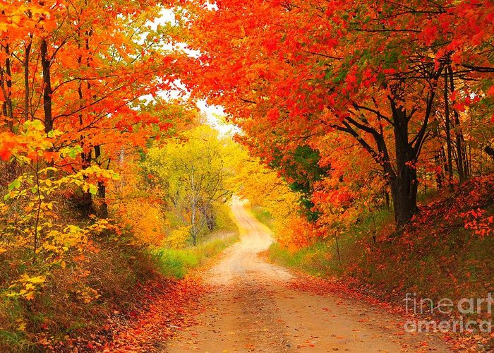 Autumn Greeting Card featuring the photograph Autumn Cameo 2 by Terri Gostola