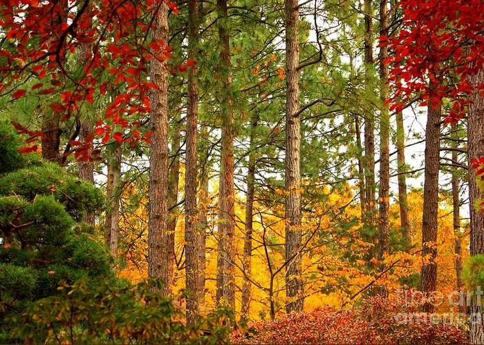 Autumn Greeting Card featuring the photograph Autumn Canvas by Carol Groenen
