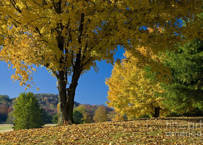 Autumn Greeting Card featuring the photograph Autumn Colors by Brian Jannsen