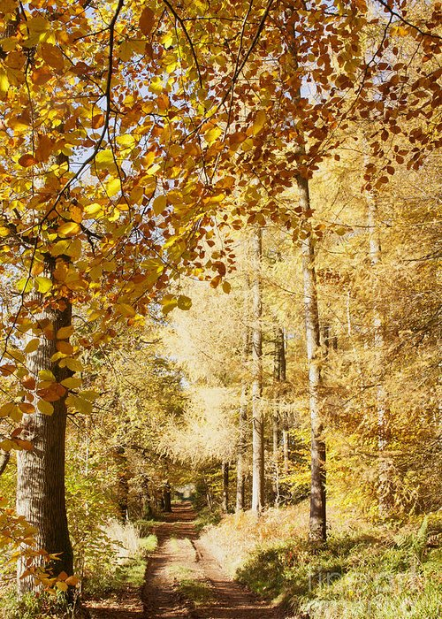 Autumn Colours Greeting Card featuring the photograph Autumn Colors Riverside Walk November 2103 by Hugh McKean