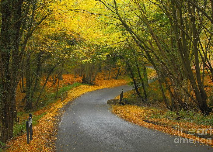 Autumn Greeting Card featuring the photograph Autumn Colours by Stephen Dowdell