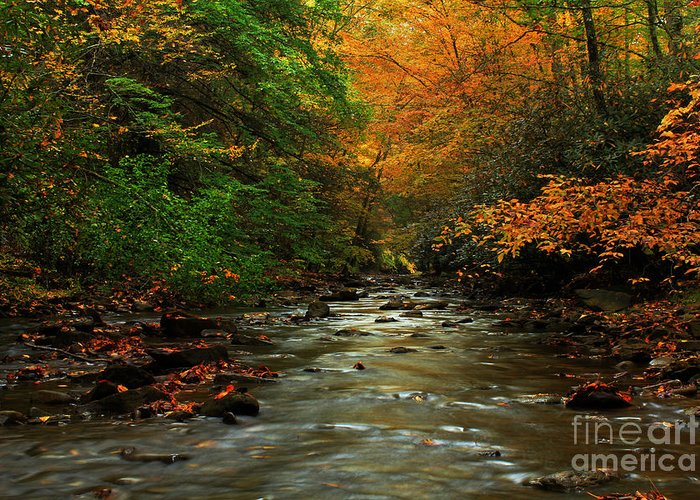 Landscape Greeting Card featuring the photograph Autumn Creek by Melissa Petrey
