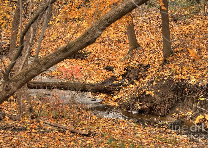 Deborah Greeting Card featuring the photograph Autumn Creekbed by Deborah Smolinske