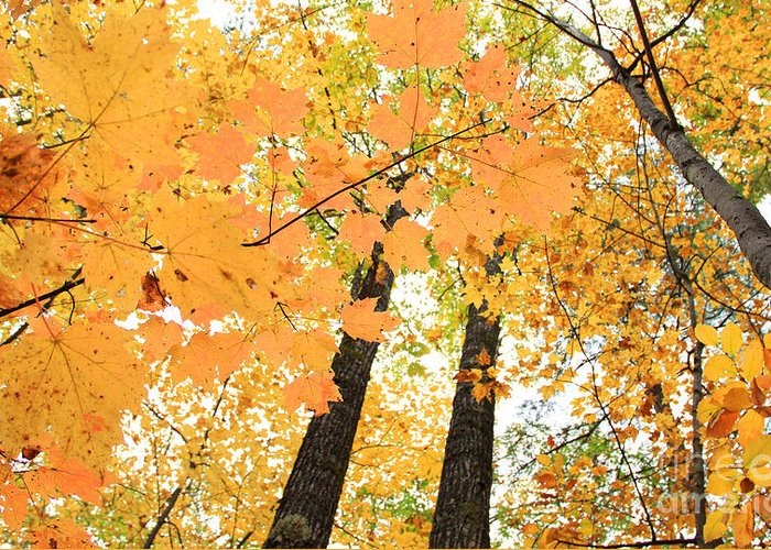 Fall In Nh Greeting Card featuring the photograph Autumn Days by Michael Mooney