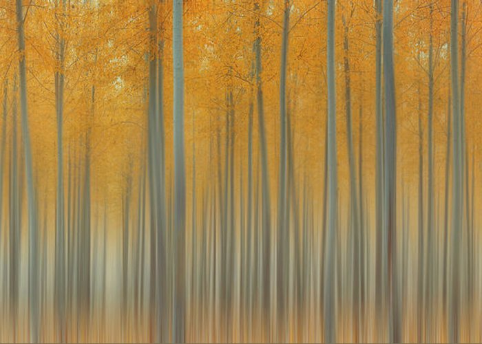Morning Greeting Card featuring the photograph Autumn Delight by Lydia Jacobs