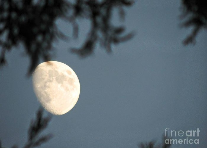 Moon Greeting Card featuring the photograph Autumn Evenings by Leslie Hunziker