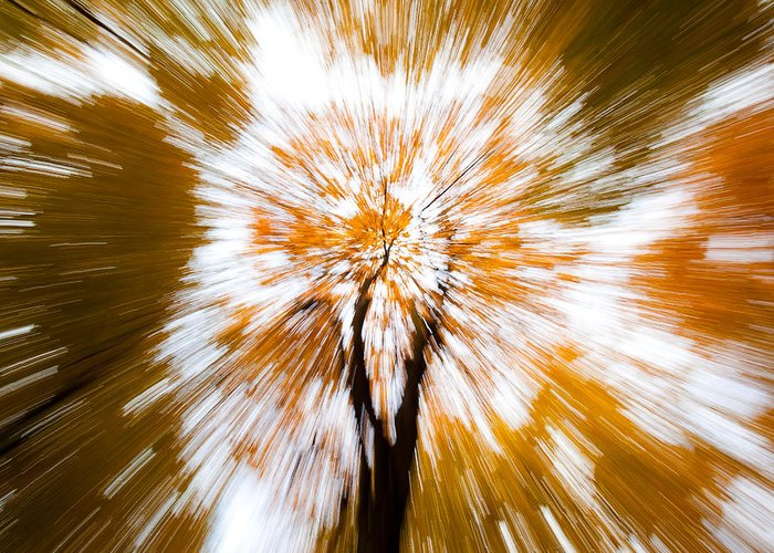 Autumn Woodland Greeting Card featuring the photograph Autumn Explosion by Dave Bowman