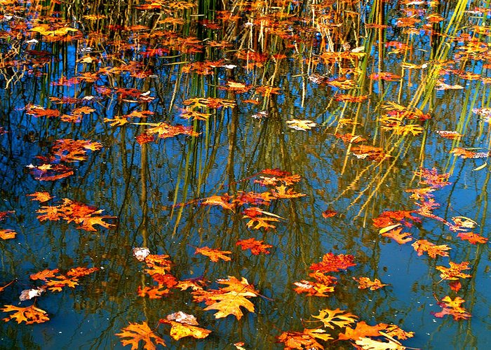 Autumn Greeting Card featuring the photograph Autumn Floating by Peggy Franz