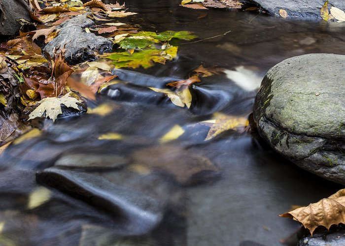 Andrew Pacheco Greeting Card featuring the photograph Autumn Flow by Andrew Pacheco