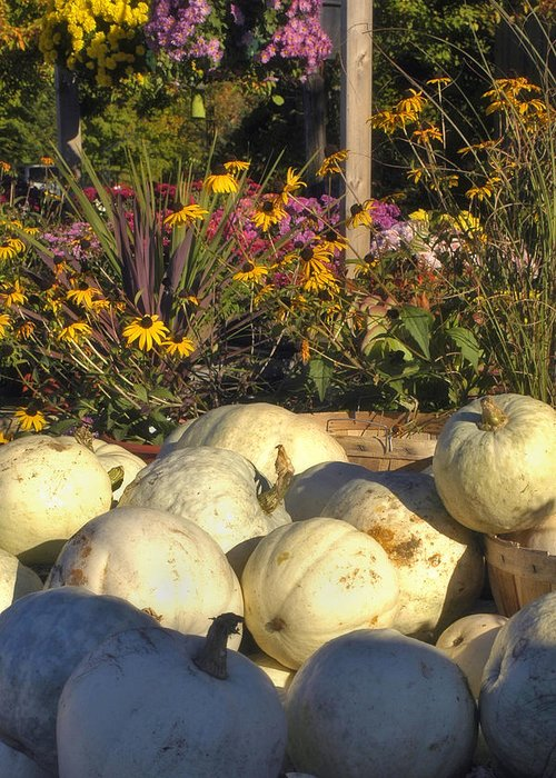 Harvest Greeting Card featuring the photograph Autumn Gourds by Joann Vitali