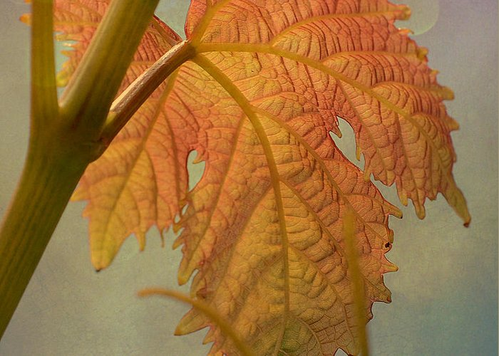 Grapevine Leaf Greeting Card featuring the photograph Autumn Grapevine by Fraida Gutovich