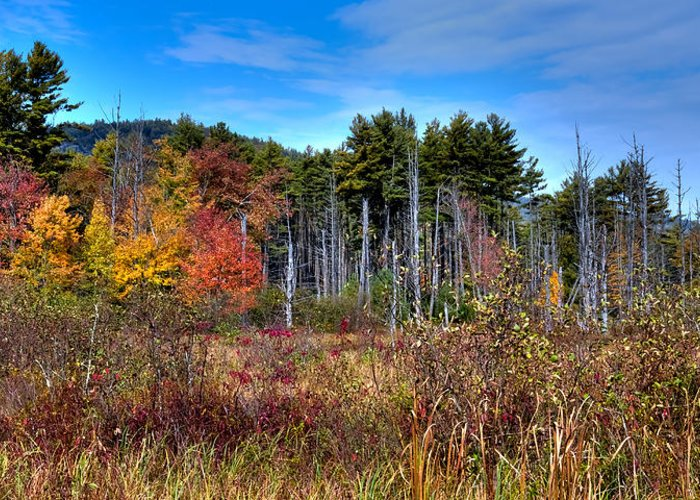 Adirondack's Greeting Card featuring the photograph Autumn In The Adirondacks by David Patterson