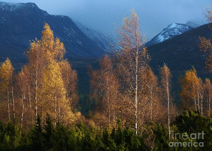 Autumn Greeting Card featuring the photograph Autumn Into Winter - Cairngorm Mountains by Phil Banks