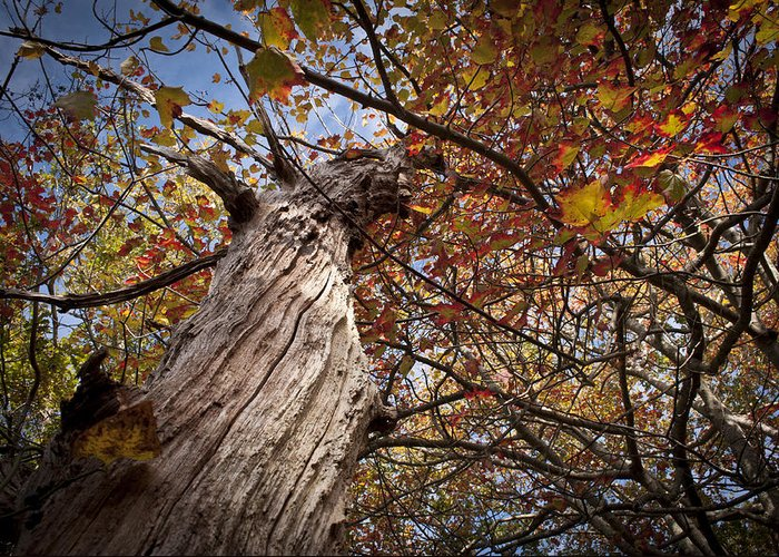 Digital Photography Greeting Card featuring the photograph Autumn Is Here by Amanda Devitt