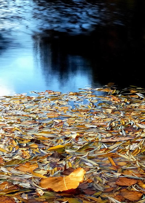 Waters Greeting Card featuring the photograph Autumn Lake by Steven Milner