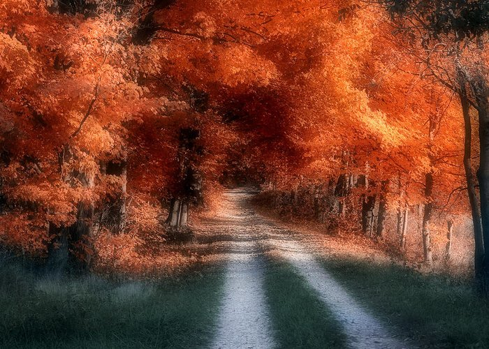 Country Greeting Card featuring the photograph Autumn Lane by Tom Mc Nemar