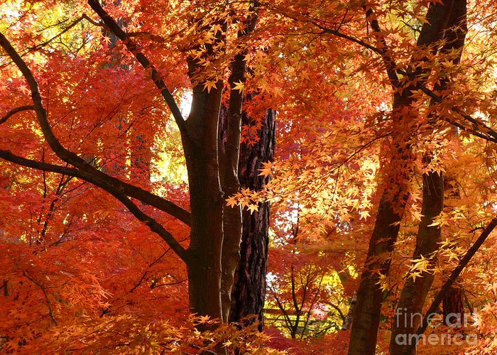 Autumn Leaves Greeting Card featuring the photograph Autumn Leaves by Carol Groenen