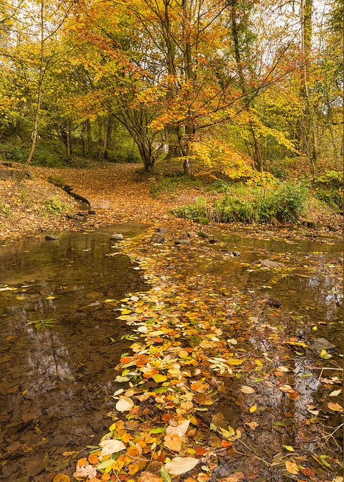 Northumberland Greeting Card featuring the photograph Autumn Leaves In Burn Vertical by David Head