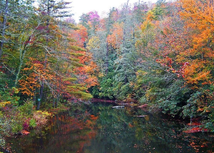 Autumn Greeting Card featuring the photograph Autumn Mountain Stream by Patricia Taylor