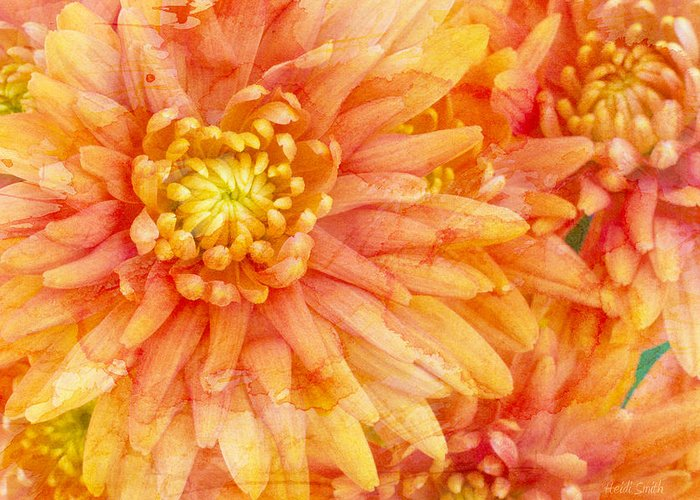 Orange Greeting Card featuring the photograph Autumn Mums by Heidi Smith