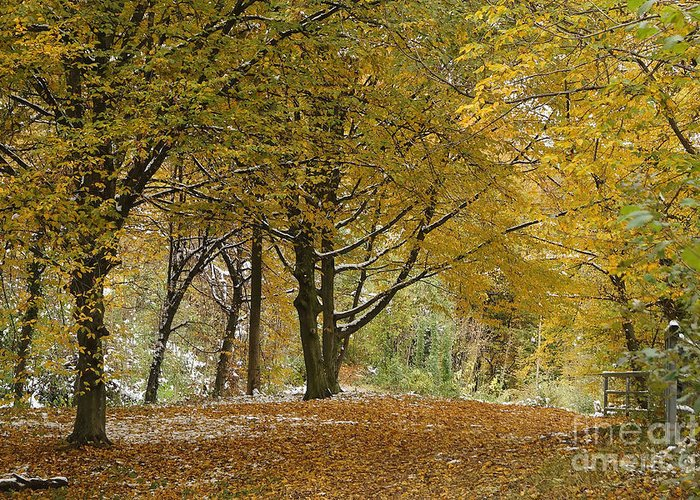 Landscape Greeting Card featuring the photograph autumn on Moenchsberg in Salzburg by Rudi Prott