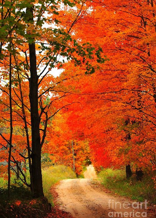 Autumn Greeting Card featuring the photograph Autumn Orange 2 by Terri Gostola