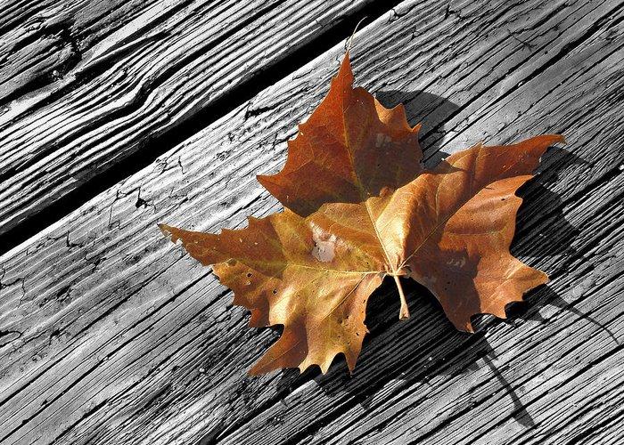 Leaf Greeting Card featuring the photograph Autumn by Ovidiu Moise