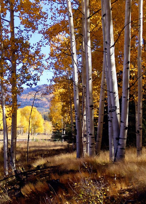 Trees Greeting Card featuring the photograph Autumn Paint Chama New Mexico by Kurt Van Wagner