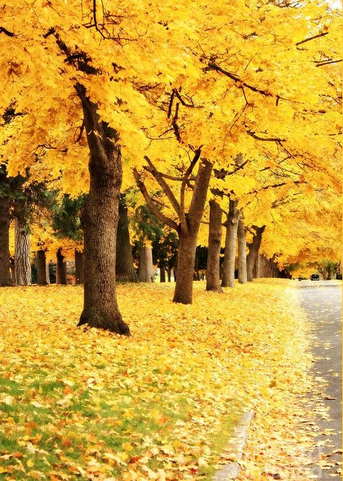 Carol Groenen Greeting Card featuring the photograph Autumn Perspective by Carol Groenen