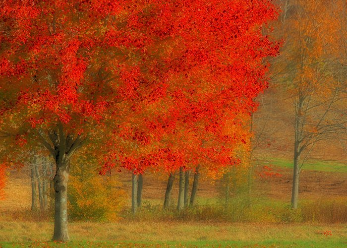 Autumn Greeting Card featuring the photograph Autumn Popping by Karol Livote