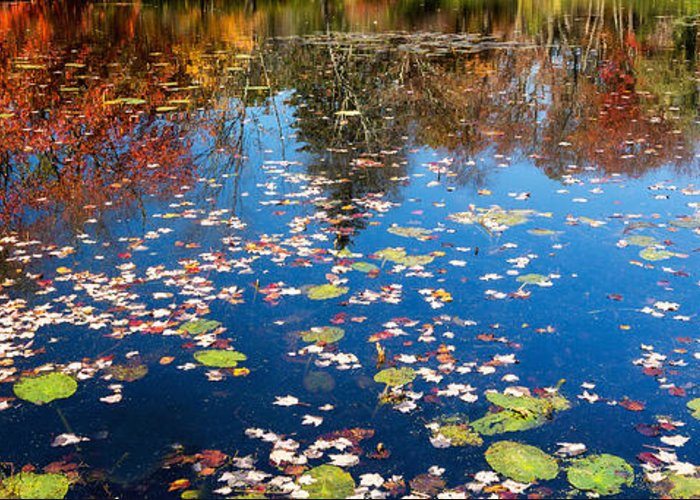 Reflection Greeting Card featuring the photograph Autumn Reflections by Bill Wakeley